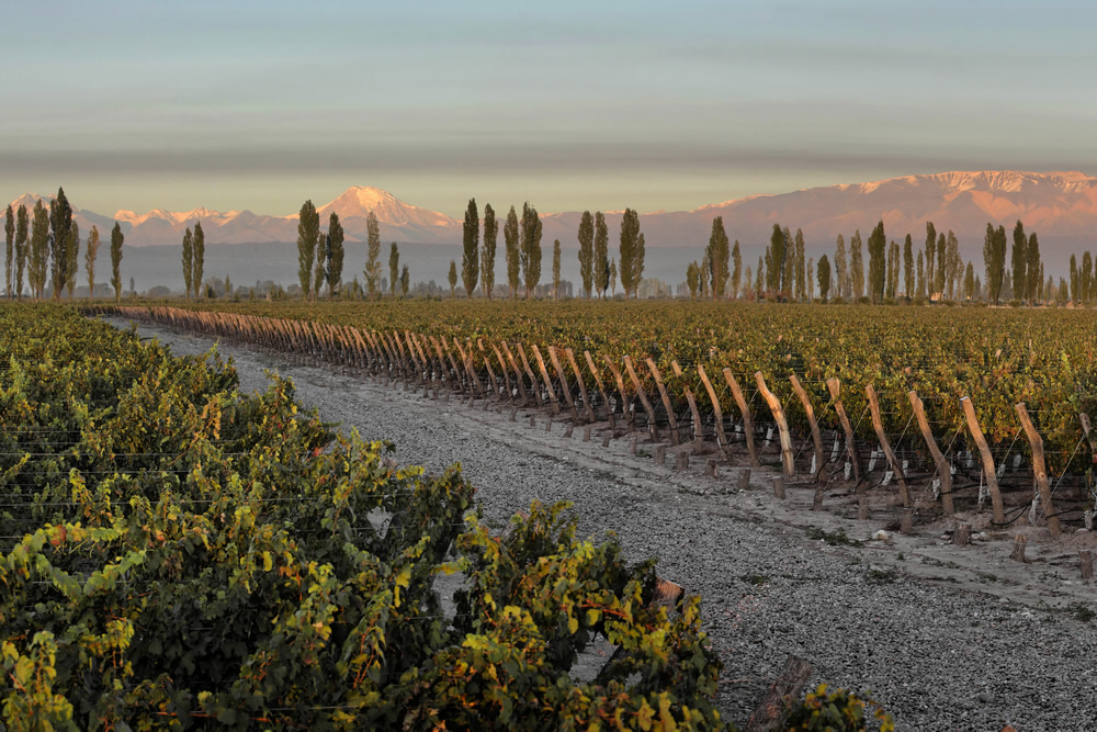 Argentinischer Wein