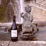 Weinbau in Venetien – Erfolgsgeschichte mit Hindernissen