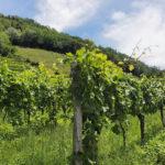 Malbec: Die Nummer eins der argentinischen Weine